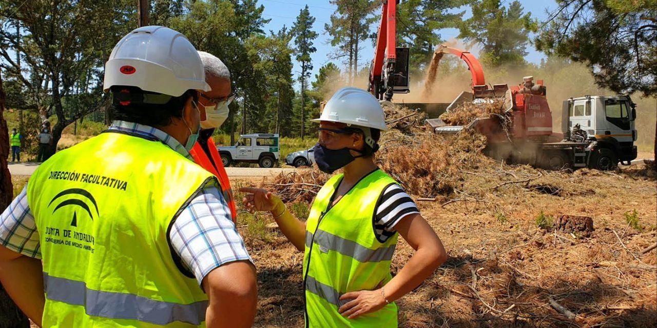 La Junta impulsa la creación de empleo verde con el Plan de Gestión Integral de Sierra Morena