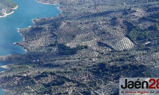 Un impulso al oleoturismo para la sostenibilidad del olivar en las comarcas de Jaén